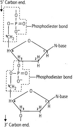 ncert-solutions-for-class-11-biology-biomolecules-3