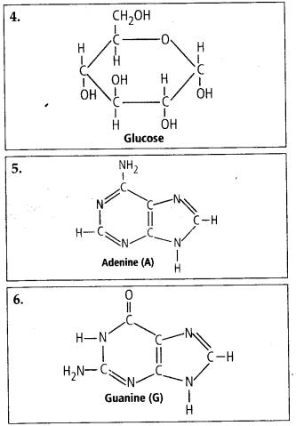 ncert-solutions-for-class-11-biology-biomolecules-5