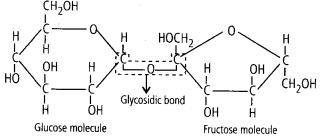 ncert-solutions-for-class-11-biology-biomolecules-1