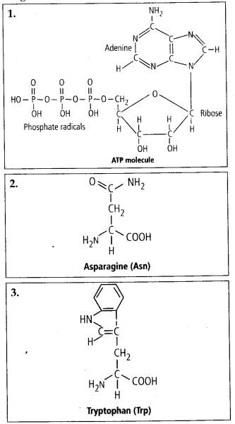 ncert-solutions-for-class-11-biology-biomolecules-4