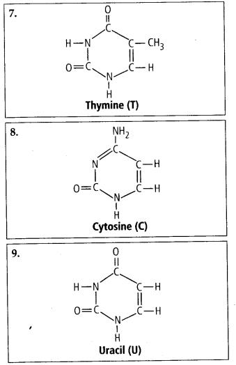 ncert-solutions-for-class-11-biology-biomolecules-6