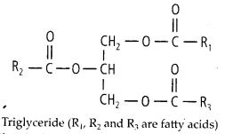 ncert-solutions-for-class-11-biology-biomolecules-8