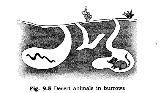 ncert-solutions-for-class-6th-science-chapter-9-the-living-organisms-and-their-surroundings-2