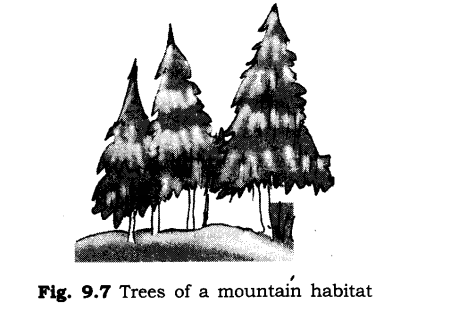 ncert-solutions-for-class-6th-science-chapter-9-the-living-organisms-and-their-surroundings-4
