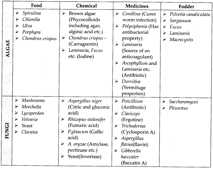 ncrt-exemplar-class-11-biology-solutions-biological-classification-3