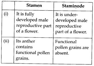 ncrt-exemplar-class-11-biology-solutions-morphology-of-flowering-plants-15