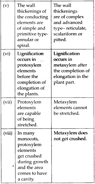 ncrt-exemplar-class-11-biology-solutions-anatomy-of-flowering-plants-22