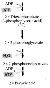 ncert-exemplar-class-11-biology-solutions-respiration-in-plants-11