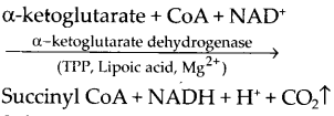 ncert-exemplar-class-11-biology-solutions-respiration-in-plants-22