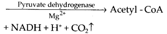 ncert-exemplar-class-11-biology-solutions-respiration-in-plants-18