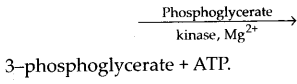 ncert-exemplar-class-11-biology-solutions-respiration-in-plants-15