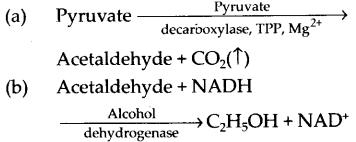 ncert-exemplar-class-11-biology-solutions-respiration-in-plants-29