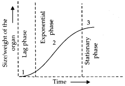 ncert-exemplar-class-11-biology-solutions-plant-growth-and-development-5