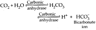 ncert-exemplar-class-11-biology-solutions-breathing-and-exchange-of-gases-6