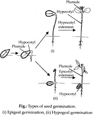 ncrt-exemplar-class-11-biology-solutions-morphology-of-flowering-plants-25