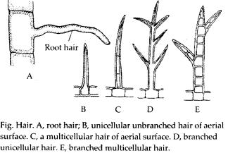 ncrt-exemplar-class-11-biology-solutions-anatomy-of-flowering-plants-1