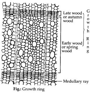 ncrt-exemplar-class-11-biology-solutions-anatomy-of-flowering-plants-3