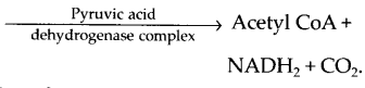 ncert-exemplar-class-11-biology-solutions-respiration-in-plants-17