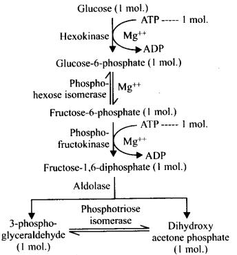 ncert-exemplar-class-11-biology-solutions-respiration-in-plants-34
