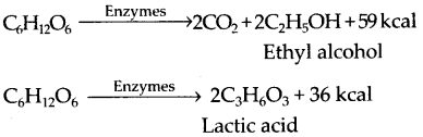 ncert-exemplar-class-11-biology-solutions-respiration-in-plants-28