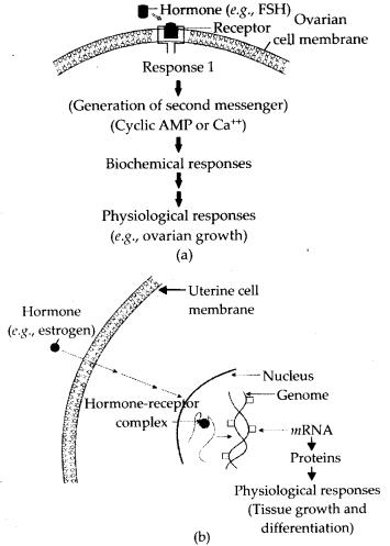 ncert-exemplar-class-11-biology-solutions-chemical-coordination-and-integration-3