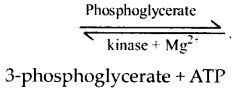 ncert-exemplar-class-11-biology-solutions-respiration-in-plants-13
