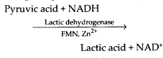 ncert-exemplar-class-11-biology-solutions-respiration-in-plants-30