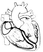 ncert-exemplar-class-11-biology-solutions-body-fluids-and-circulation-12