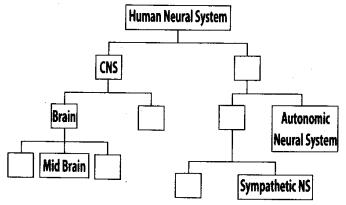 ncert-exemplar-class-11-biology-solutions-neural-control-and-coordination-2