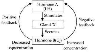 ncert-exemplar-class-11-biology-solutions-chemical-coordination-and-integration-2