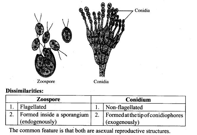 Asexual propagation examples of idioms