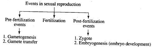 ncert-exemplar-problems-class-12-biology-reproduction-in-organisms-1