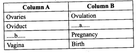 ncert-exemplar-problems-class-12-biology-human-reproduction-8