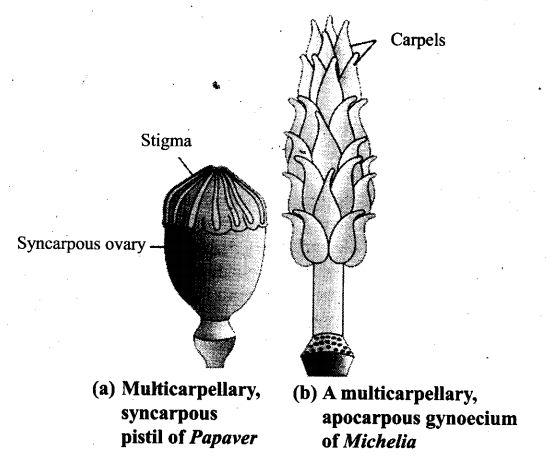 ncert-exemplar-problems-class-12-biology-sexual-reproduction-flowering-plants-12