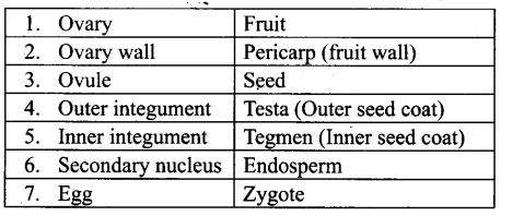 ncert-exemplar-problems-class-12-biology-sexual-reproduction-flowering-plants-3