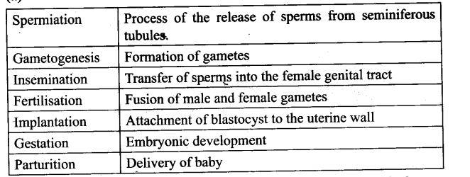 ncert-exemplar-problems-class-12-biology-human-reproduction-1