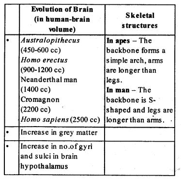 ncert-solutions-for-class-12-biology-evolution-1