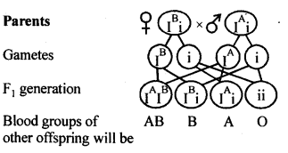 ncert-solutions-for-class-12-biology-principles-of-inheritance-and-variation-8