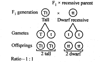 ncert-solutions-for-class-12-biology-principles-of-inheritance-and-variation-4