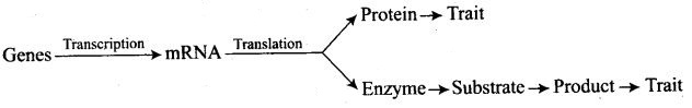 ncert-exemplar-problems-class-12-biology-principles-inheritance-variation-5