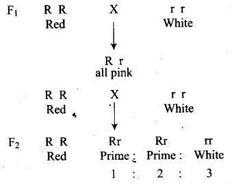ncert-exemplar-problems-class-12-biology-principles-inheritance-variation-8