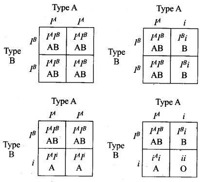 ncert-exemplar-problems-class-12-biology-principles-inheritance-variation-9