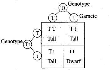 ncert-exemplar-problems-class-12-biology-principles-inheritance-variation-3