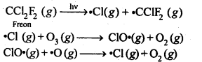 ncert-solutions-for-class-12-chemistry-the-p-block-elements-13