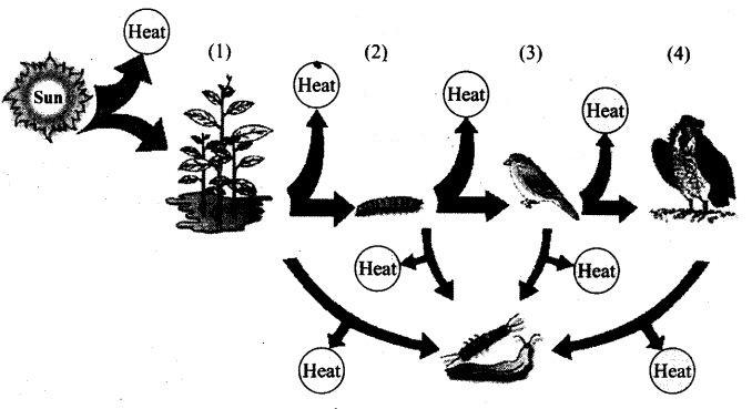 ncert-exemplar-problems-class-12-biology-ecosystem-3