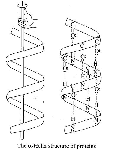 ncert-exemplar-problems-class-12-chemistry-biomolecules-47
