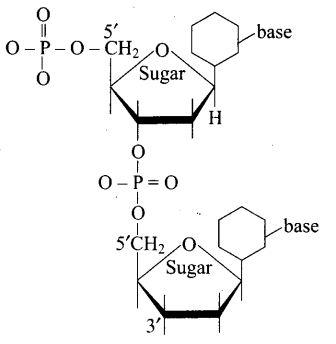 ncert-exemplar-problems-class-12-chemistry-biomolecules-7