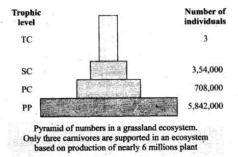 ncert-exemplar-problems-class-12-biology-ecosystem-5