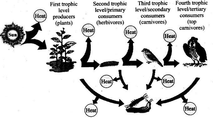 ncert-exemplar-problems-class-12-biology-ecosystem-4