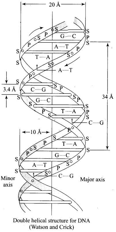ncert-exemplar-problems-class-12-chemistry-biomolecules-51